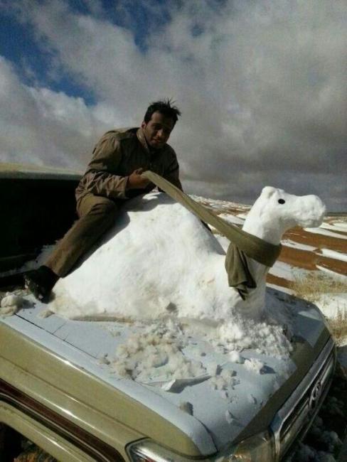 Snow Camel 768431a8-0f29-40e2-a93c-7a043391fbd6