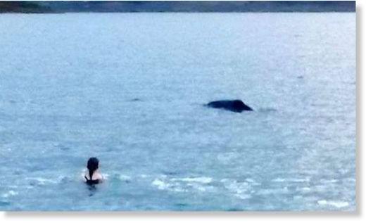 Whale bowheadwhale_561024
